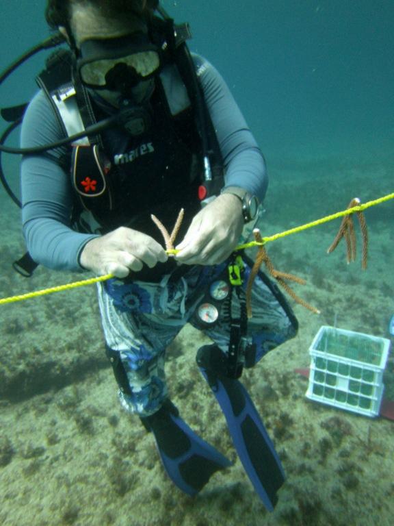 Acerca de la Fundación Reef Check