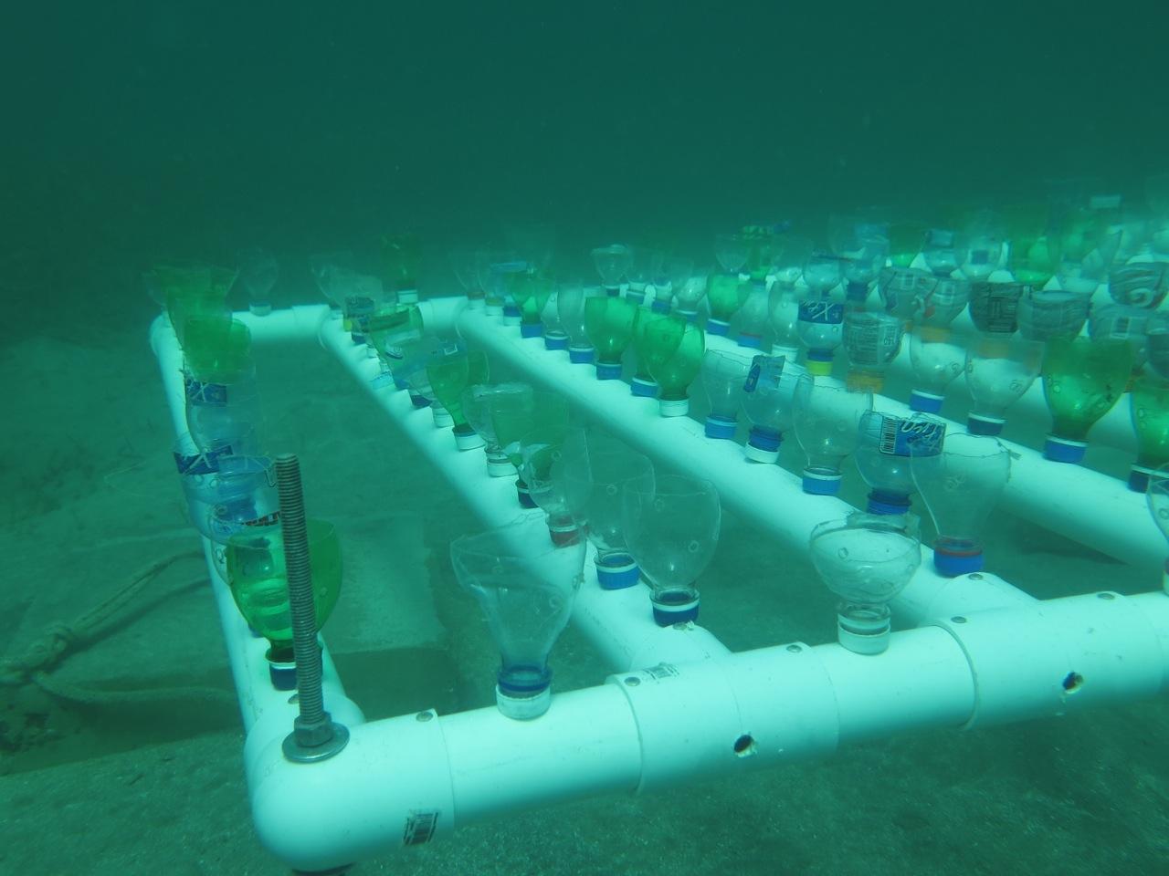 Reef Check en la República Dominicana
