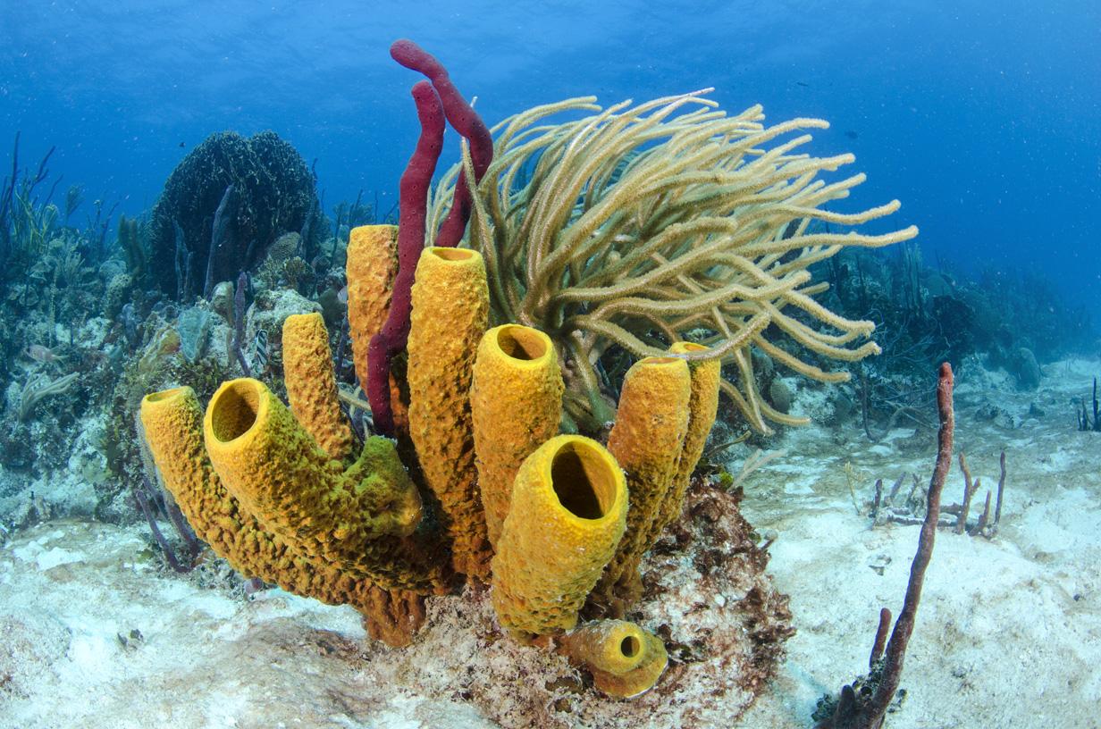 Reporte del Estado de los Arrecifes de Coral en República Dominicana 2015